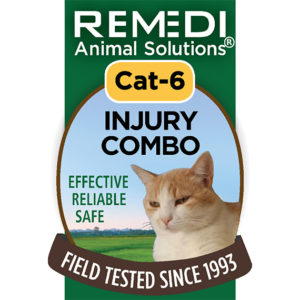 Cat-6-Injury-Combo